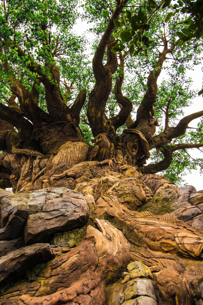 You'll get up close with the Tree of Life!