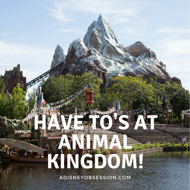 Have To's At Animal Kingdom