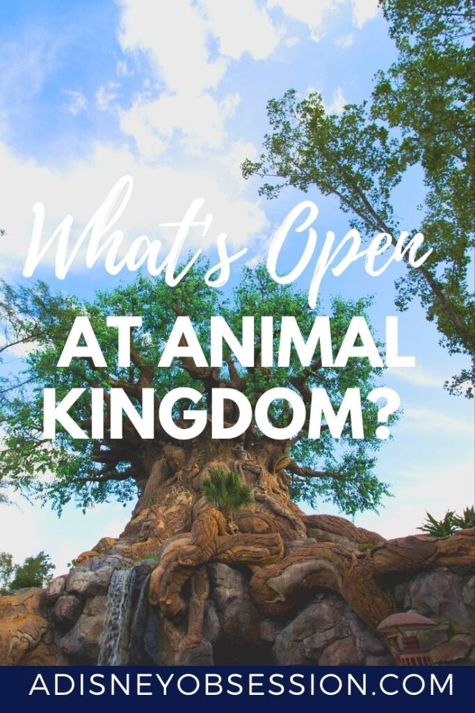 What's open at Animal Kingdom